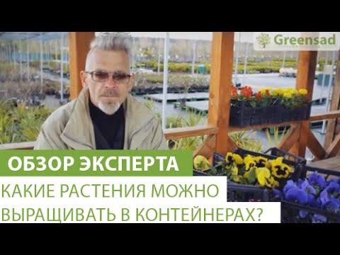 Какие растения можно выращивать в контейнерах?