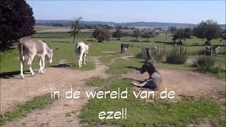 De ezel - Enkele weetjes over het houden en verzorgen van ezels
