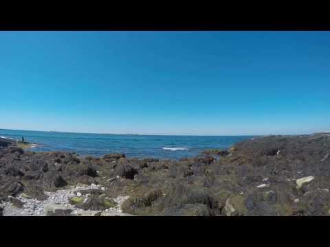 Intertidal Zone Exploration