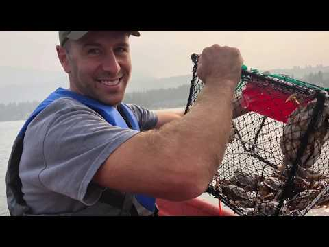 Crabbing For Our First Time On The Sunshine Coast, Sechelt, BC, Canada
