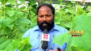 Success Story of Vijayan Pillai in Gulf Insight, Reporter TV