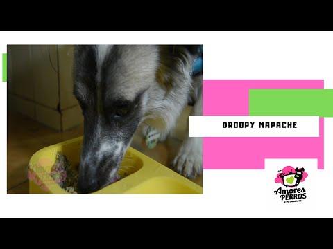 Droopy y la experiencia Bocantino