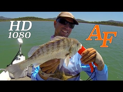 Saltwater Fly Fishing & Soft Plastic fishing Andrew Andysfishing Fishing Video Fish EP.183