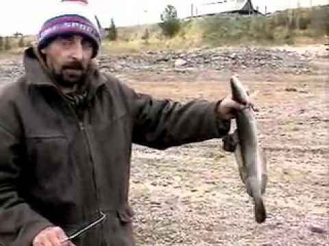 Енисейский налим диалоги о рыбалке