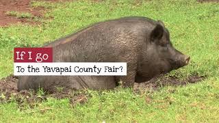 Yavapai County Fair  Youth Livestock Sponsorships