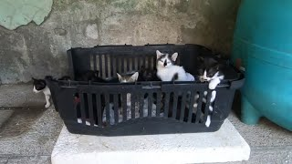 Too many hungry kittens waiting for me under the bridge
