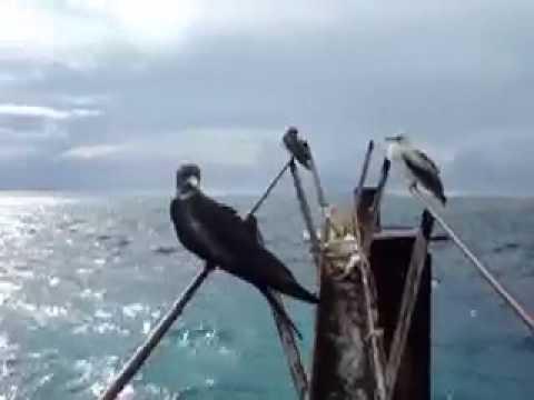 Tern Island Holiday