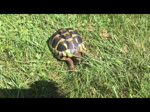 Do Tortoises Make Good Pets?