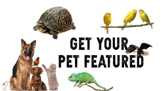 Get your Pet Featured (Birds,Cats,Dogs,Reptiles,Turtles,Fish...)