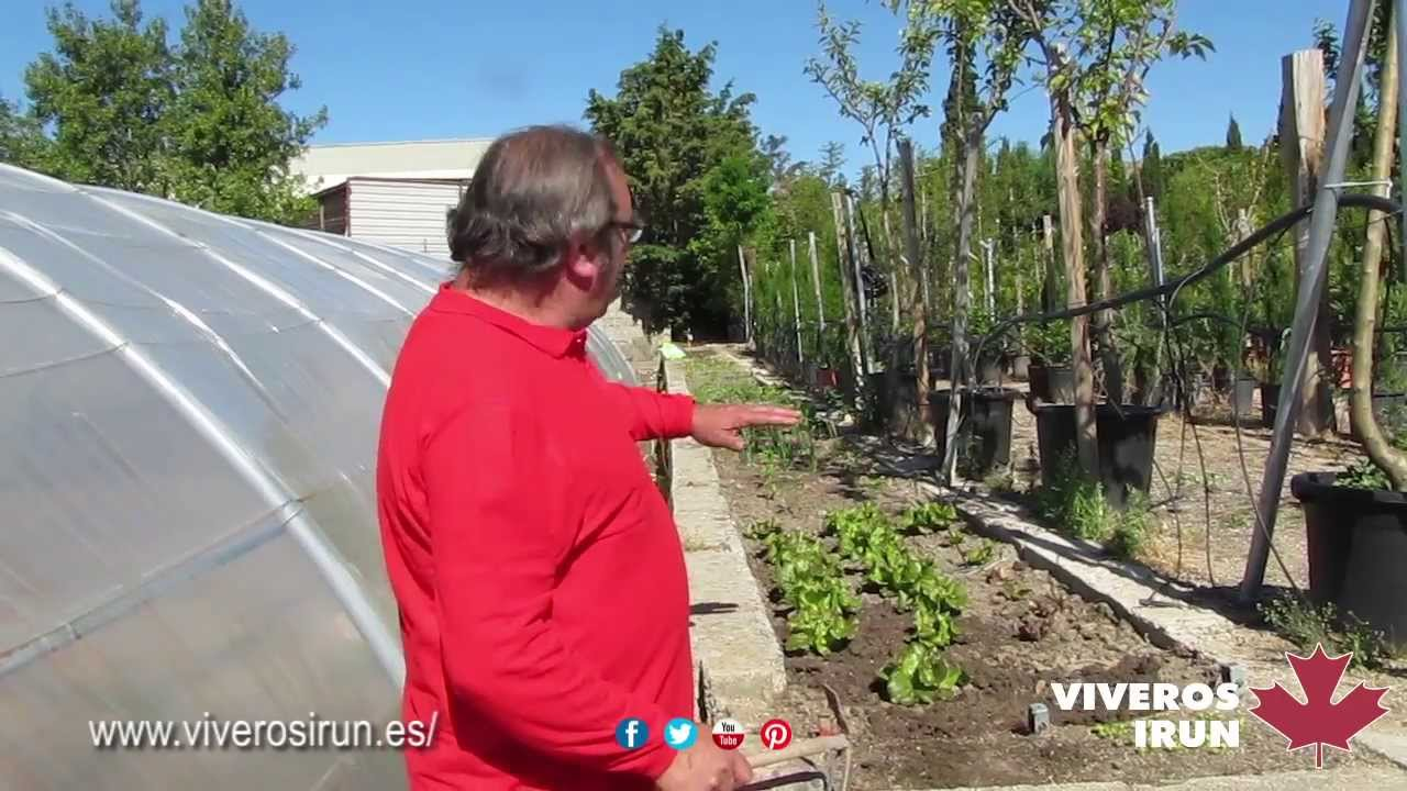 Huerto en bancal huerto urbano viveros ir n sierra for Viveros madrid norte