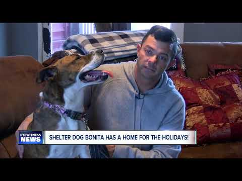 Shelter Dog Adopted Just In Time For Christmas Is Loving Her New Home