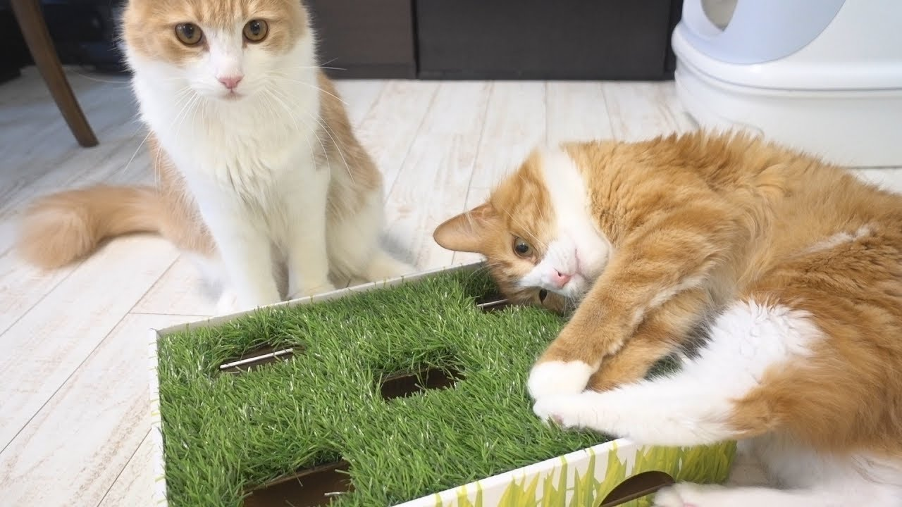 Best Toy For Active Cats