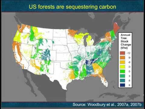 Bioenergy in the CPP Webinar:  C Accounting