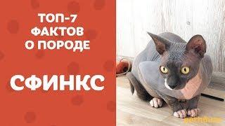 КАНАДСКИЙ СФИНКС топ-7 фактов о породе | У сфинксов есть ШЕРСТЬ? Почему кот спит в МИКРОВОЛНОВКЕ?