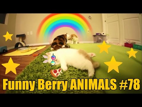 Extreme cute kittens video weekly | Pets Video AUGUST 2016 | Funny Berry Animals #78