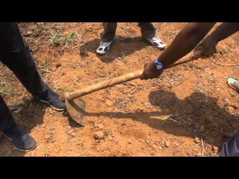 How to take soil sample by V method