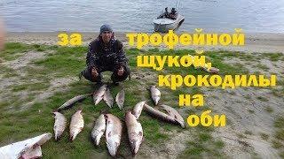 Трофейная рыбалка! Хорошие щуки! Река Обь.