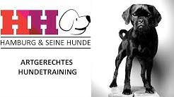 Hamburg & seine Hunde   Folge 16 - Artgerechtes Hundetraining