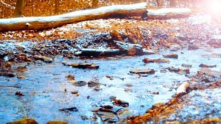 Gentle Winter Forest Stream and Calm Piano Music: Beautiful Relaxing Music, Sleep Music, Study Music