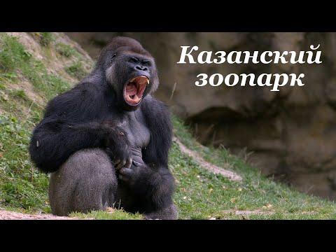 Казанский зоопарк #лучшедома #сидимдома #мывместе #живемдома #самоизоляция