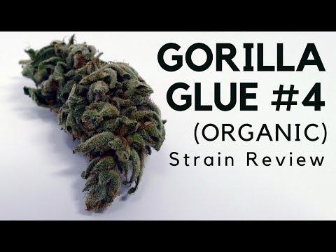 Gorilla Glue #4 (Organic)   Cannabis Strain Information & Review