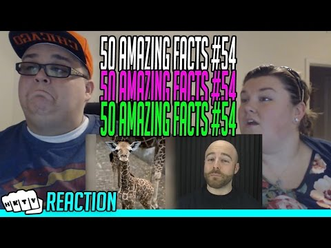 50 AMAZING FACTS TO BLOW YOUR MIND #54 REACTION!!🔥