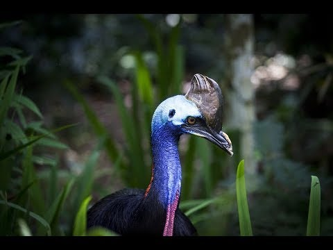 World's Weirdest Bird Sounds
