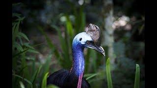 World's Weirdest Bird Sounds  Part One