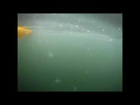 Paddling With Jellyfish In Brentwood Bay, BC
