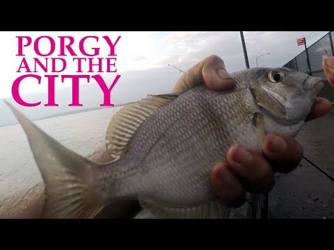 FAST & FUN NYC FISHING - PORGY IN THE CITY - NEW YORK CITY PORGIES - URBAN FISHING!!!