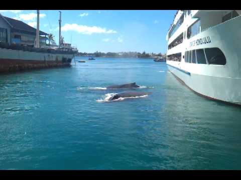 Honolulu Harbor Whales