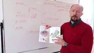 Mapy myśli kontra podręcznik 7 klasisty