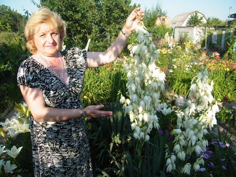 Вопрос: Что это за цветок (на фото), как ухаживать, как размножается?