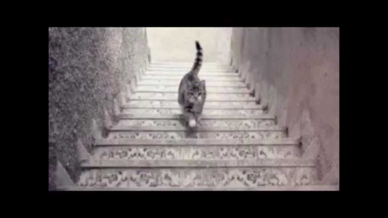 Ce chat monte ou descend les escaliers youtube - Table qui monte et qui descend ...