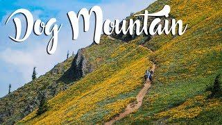 Dog Mountain Hike | Vlog 16