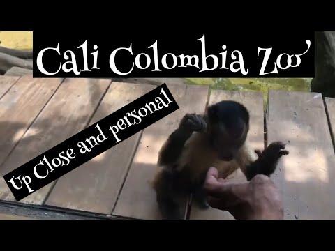 Zoologico de Cali (Zoo in Cali Colombia Pt1)
