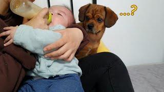 (심쿵주의) 아기를 처음 보는 강아지의 반응!