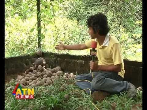wildlife news of Safari Park, Cocxbazar, Bangladesh - Star Tortoise