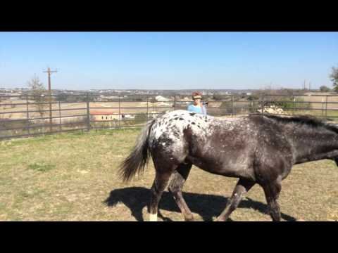 Teach a Horse to Stop Precisely  - Round Pen Exercise