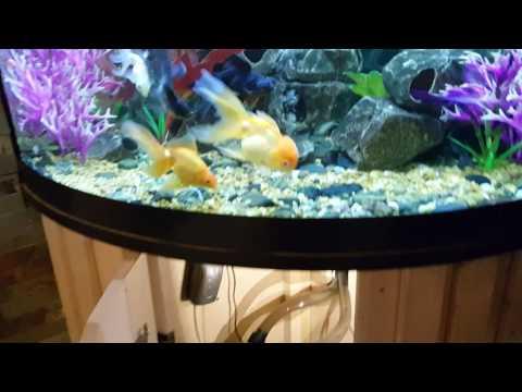 Marineland C530 Canister filter Review Aquarium filtration