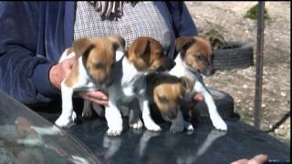 Sold Puppies For Sale