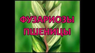 Фузариоз колоса пшеницы (Fusarium cuimorum, Fusarium graminearum)
