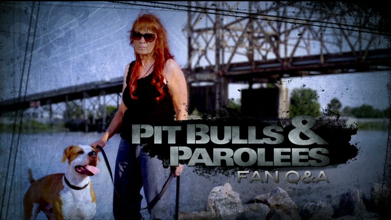 Animal Planet Pit Bulls