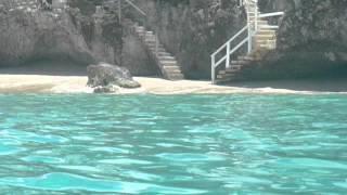 Jammin' Catamaran Cruise Barbados | Barbados-Information.com