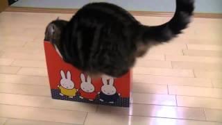 Кошки любят коробки. Подборка 2014