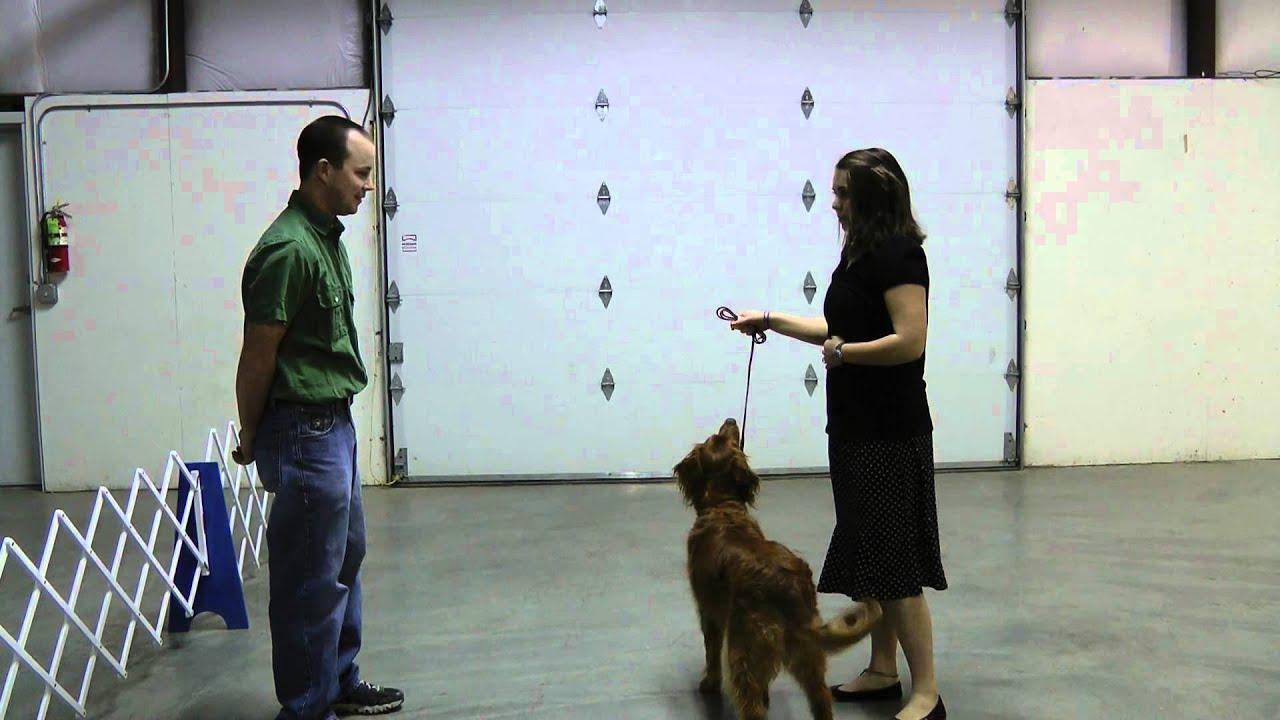 3h T Pattern Oregon 4 H Dog Showmanship Project