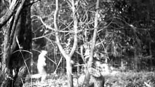 Stimmkraft - Unter Wölfen ( eigenes Video)