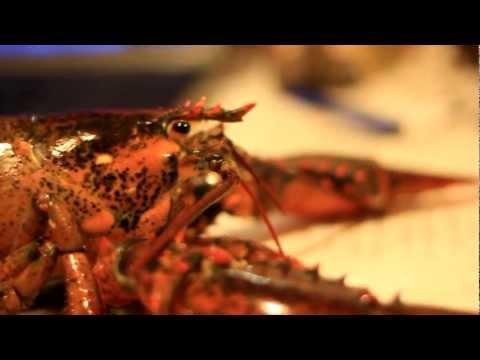 How to Boil a Live Maine Lobsterиз YouTube · Длительность: 5 мин35 с  · Просмотры: более 146000 · отправлено: 10.09.2009 · кем отправлено: Lobster Gram