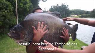Tambacu de 41kg - Centro de Pesca Taquari