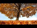 "Peaceful music, Relaxing music, Nature Instrumental music ""Golden Harvest"" by Tim Janis"